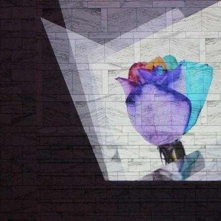 rainbow-rose-5